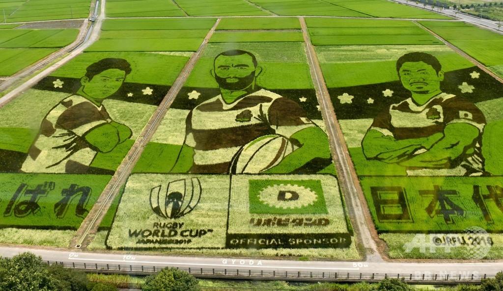 田んぼから応援、ラグビー日本代表の巨大アート出現 埼玉