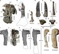 「怪物」サイズのペンギン、ニュージーランドで化石発見