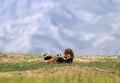 中国・新疆ウイグル自治区に帰ってきた「草原見守り隊」