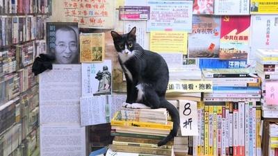 動画:本を読みつつ猫を愛でられる書店 香港