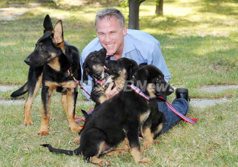 9.11テロの「英雄犬」をクローン化、飼い主は救助犬にしたい意向