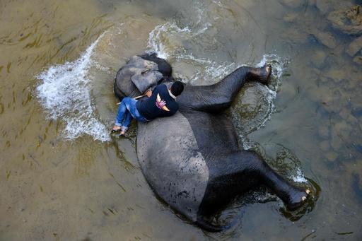 気持ちいいゾウ、川で水浴び インドネシア