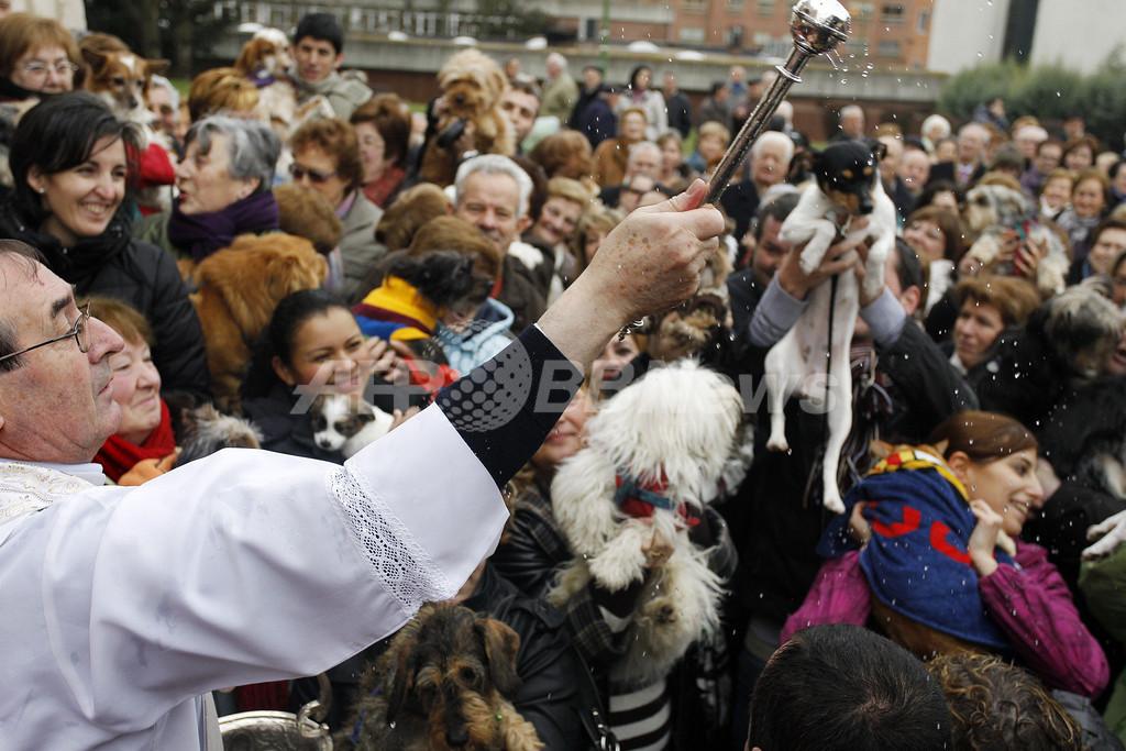 イヌもネコもハムスターもブタも、み~んな祝福 スペイン
