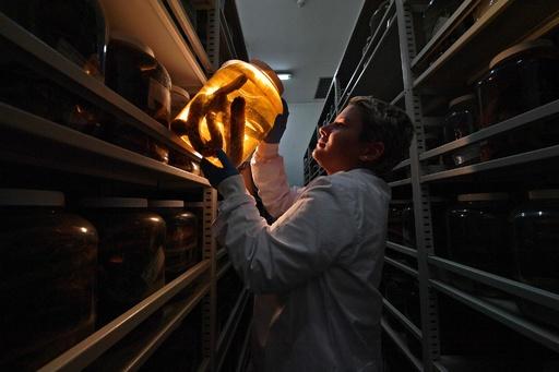救命の大役を担う、ブラジルの毒ヘビ研究所