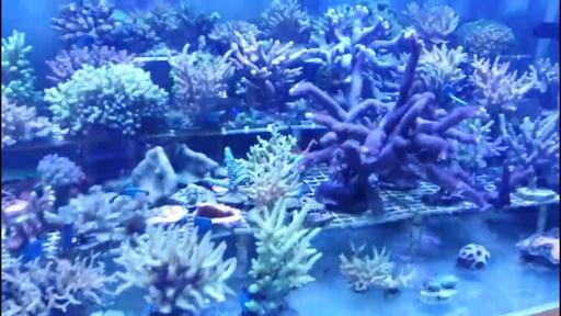 動画:広西・潿洲島でサンゴの育成者を訪ねる