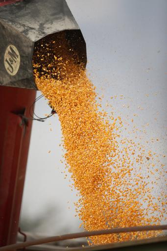 農薬の効かない雑草「スーパーウィード」、米国で大繁殖