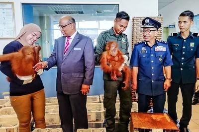 オランウータンなど野生動物400種類を保護、密輸船捕獲で マレーシア