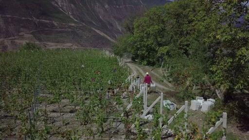 動画:ヒマラヤ山麓で造る中国製高級ワイン、モエ・ヘネシーの挑戦