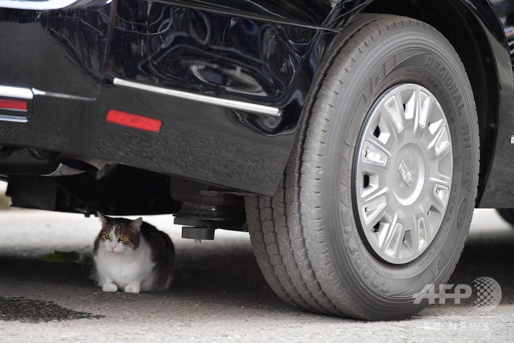 英首相官邸の猫ラリー、トランプ氏専用車の下でくつろぐ?