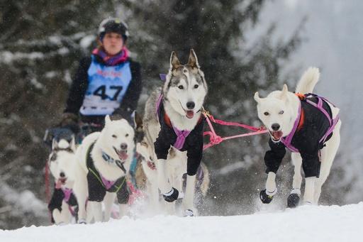 チェコで過酷な犬ぞりレース、100人参加も完走は約半数
