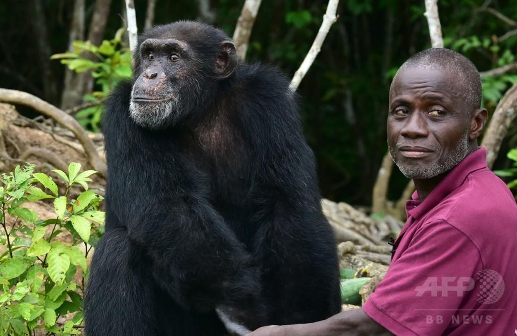【AFP記者コラム】孤独に生き残るチンパンジーとの出会い