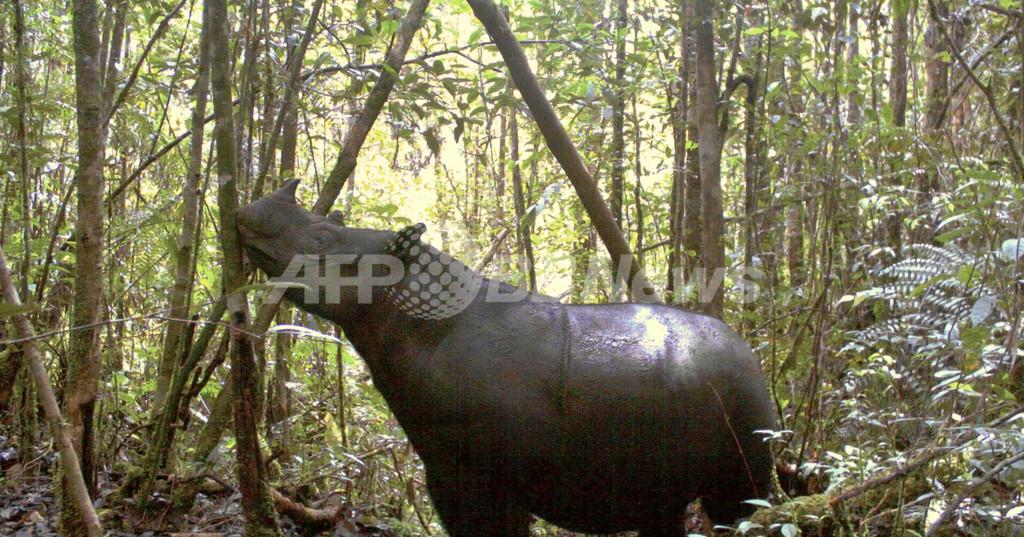 スマトラ島で絶滅の危機にあるスマトラサイ7頭を確認