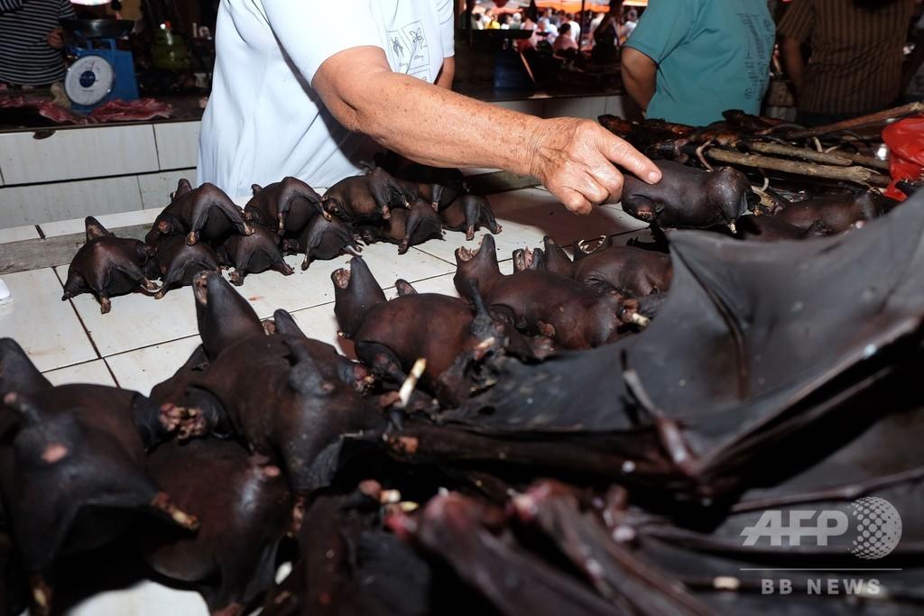 ウイルス懸念のコウモリ肉、市場で売買続く インドネシア