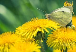 独自然保護区の昆虫、約30年で4分の1以下に 研究