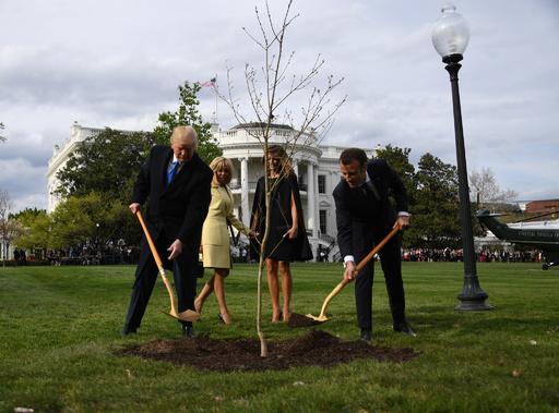 米仏首脳が植樹の「友好の苗木」、育たず枯れていた