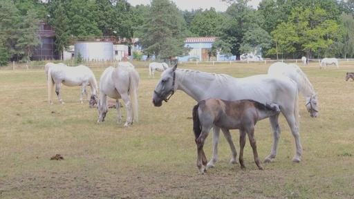 動画:500年の歴史を誇るチェコの種馬飼育牧場、世界遺産に