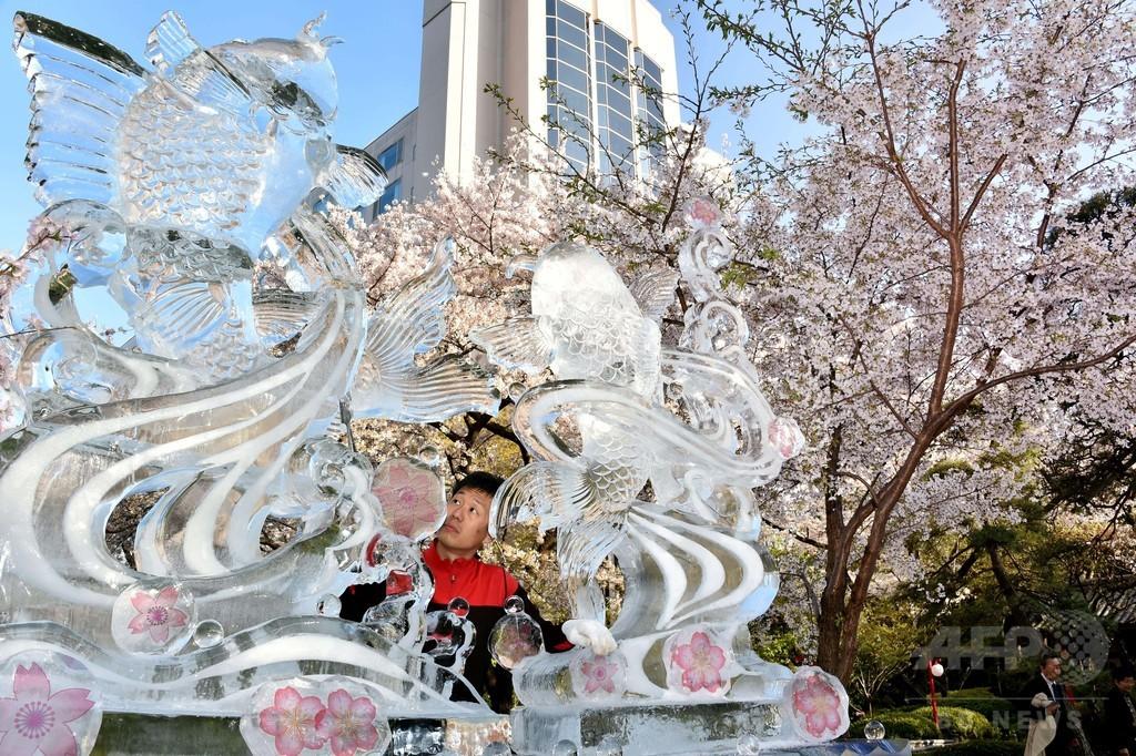 満開の桜と氷の彫刻、都内のホテル