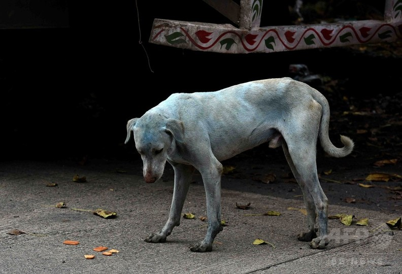 インドで「青い犬」が話題に 染料排出疑いの工場閉鎖