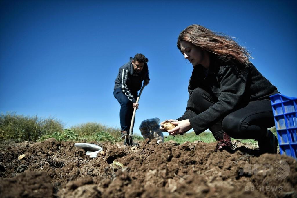 ギリシャで大地に戻る難民たち、農業で意欲取り戻す