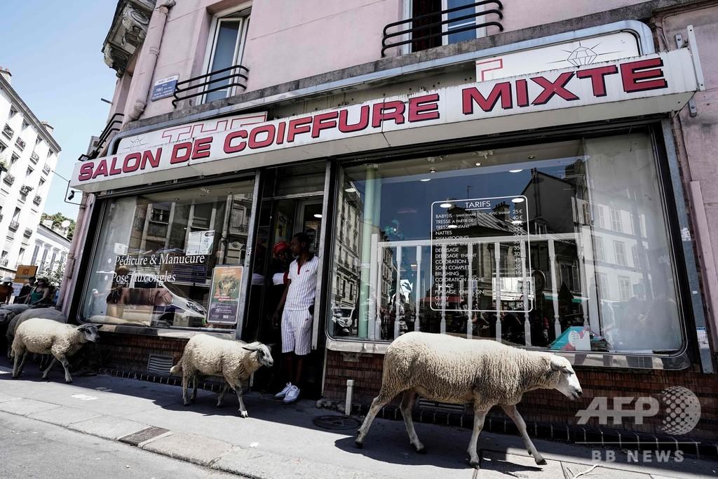 目指すはパリ中心地? 街を歩くもふもふの羊たち