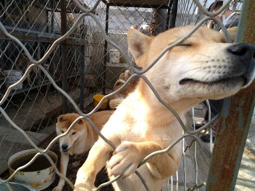 「野良犬の安楽死」は必要? 問われる飼い主の責任 中国・深セン