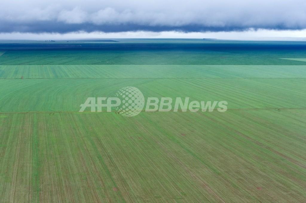 農家とモンサントの法廷闘争、遺伝子組み換え大豆の特許使用料で ブラジル