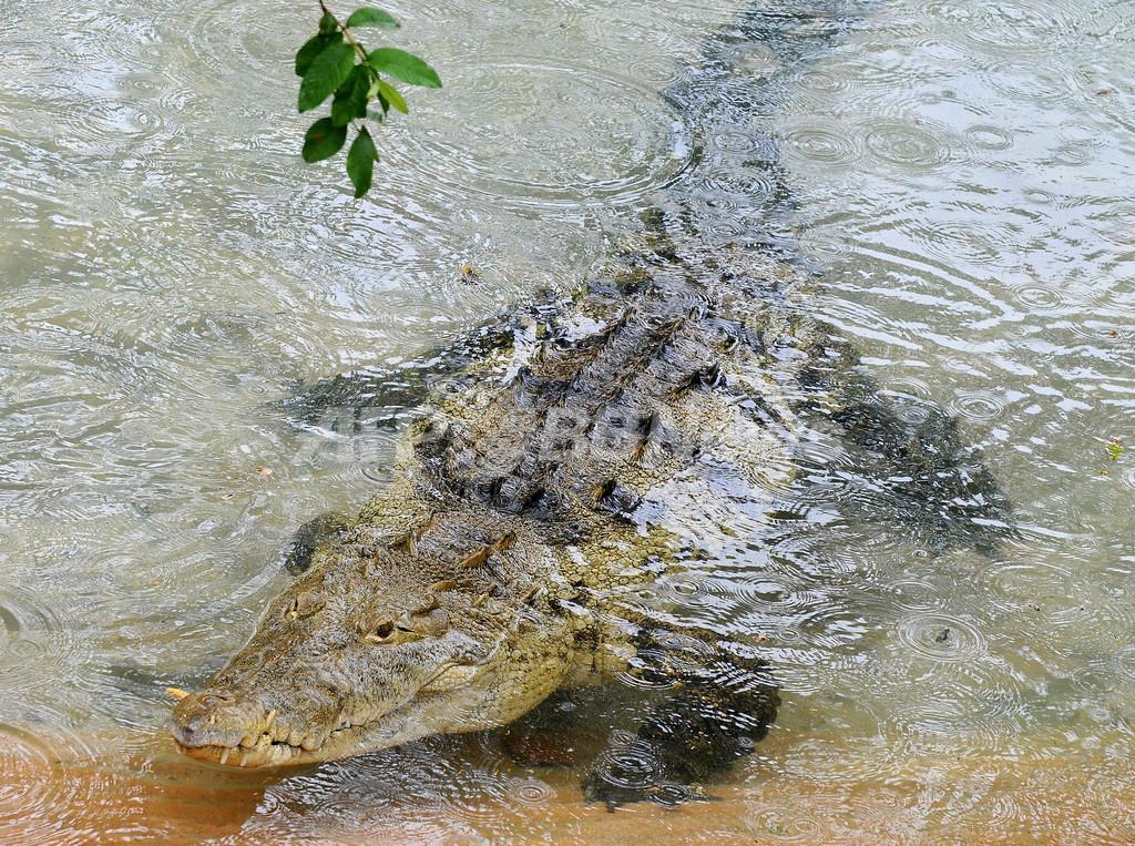 カリブ海諸島の動植物園にオモシロ動物が集合