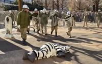 シマウマが脱走?上野動物園で「猛獣脱出訓練」