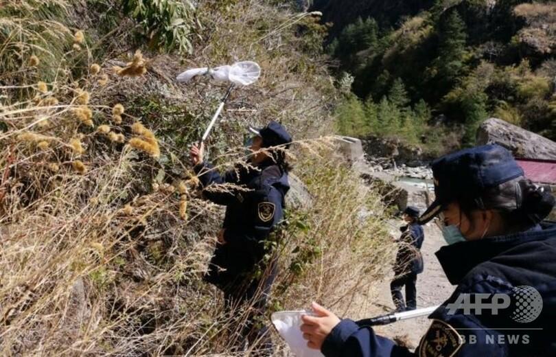 バッタ中国 コロナの裏で、中国に「ヤバすぎる数」のバッタの大群が襲ってきた…!(夫馬 賢治)