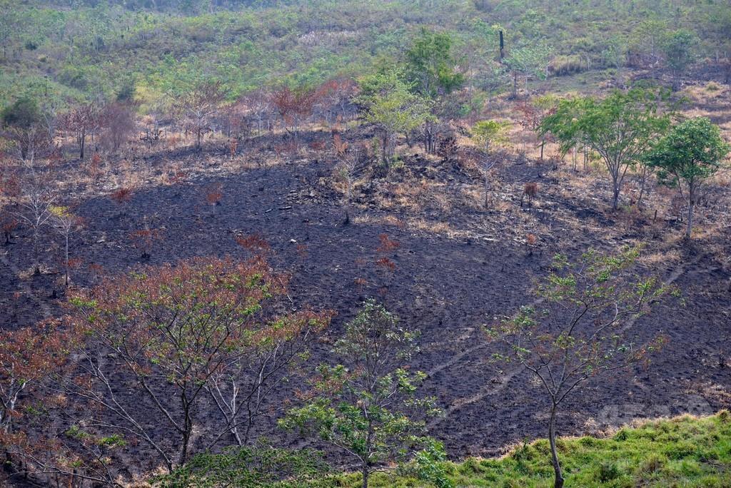 森林焼き払い滑走路建設、中米グアテマラの麻薬組織