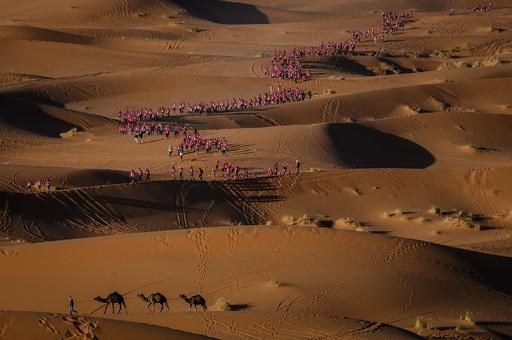 【今日の1枚】砂漠に彩り、バラ色の列