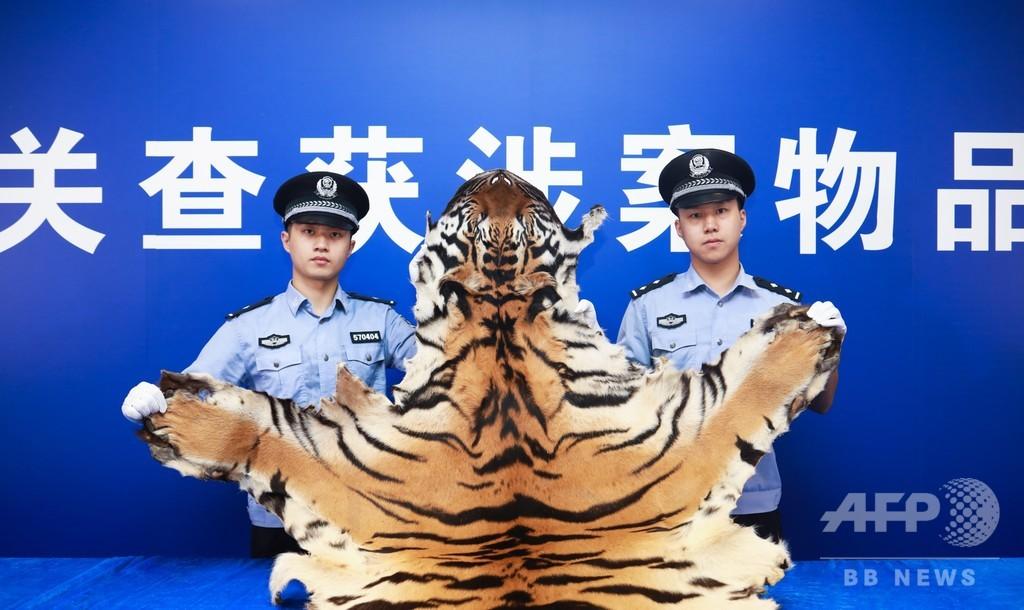 トラの皮など絶滅危惧種の製品密輸を摘発、広東省の税関