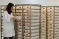 デング熱、遺伝子組み換え蚊で対抗 生態系破壊懸念も ブラジル
