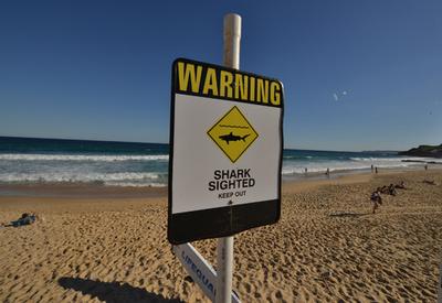 オーストラリアのビーチでまたサメの襲撃、サーファーが重傷
