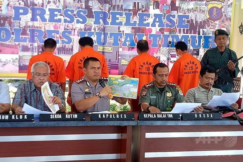 空気銃の弾130発、オランウータンに浴びせた男4人逮捕 インドネシア