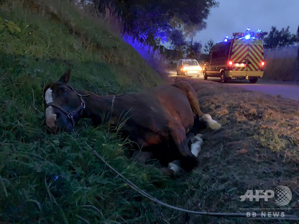 仏で相次ぐ馬の生殖器などの切断事件、逮捕者釈放