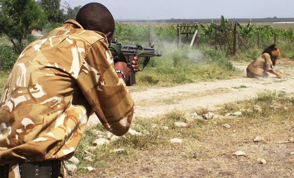 人襲ったライオンを射殺、ナイロビ郊外
