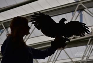 希少な鳥の羽根1万点、約7億円相当を盗む スイスの愛好家を起訴