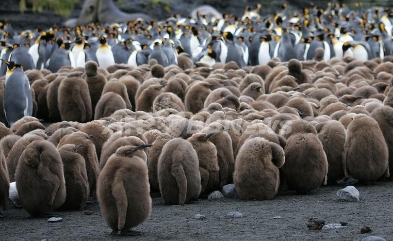 気温2度上昇で、南極のペンギンが半数以上死滅 WWF
