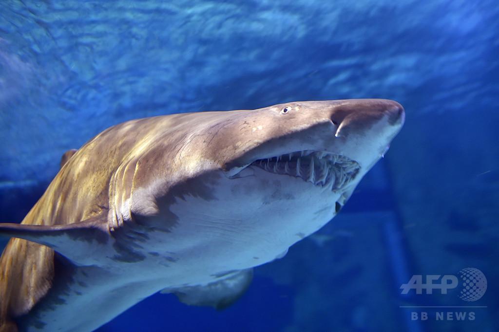 豪17歳少女、サーフィン中にサメに襲われ死亡 家族の目前で