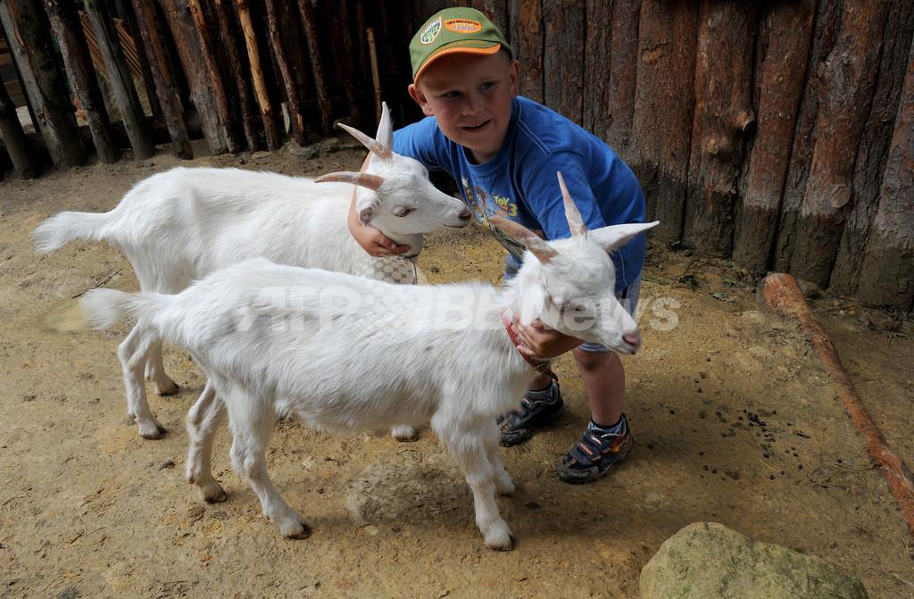 ヤギと遊んでアフリカにヤギをプレゼント、チェコ