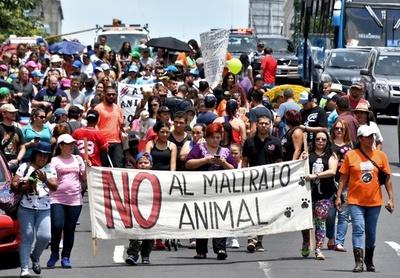 動物愛護訴えデモ行進、水遊びする犬も コスタリカ