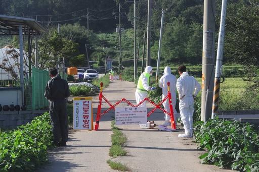 韓国で豚コレラの発生確認 同国初