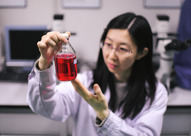 中国の科学者ら、ヒト細胞の新型抗HIVタンパク質を発見