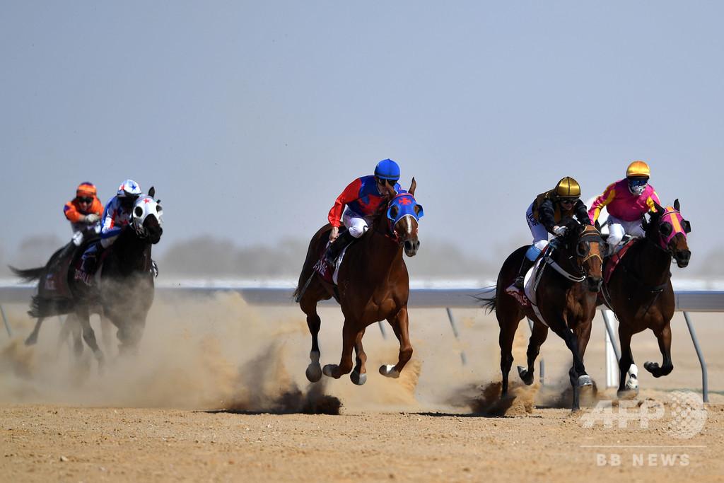 豪競走馬、年数千頭が虐待され食肉処理か 日本にも輸出 潜入調査報道