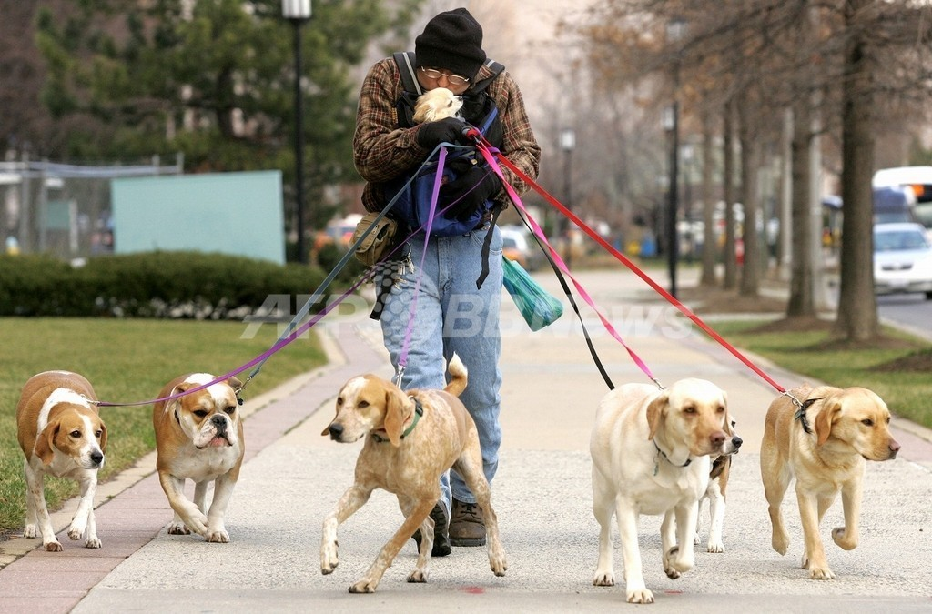 飼い主だけでなくペットの肥満も増加、米国