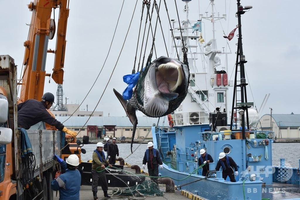 アイスランドの捕鯨業者、今年もクジラ漁断念 日本との競争も一因