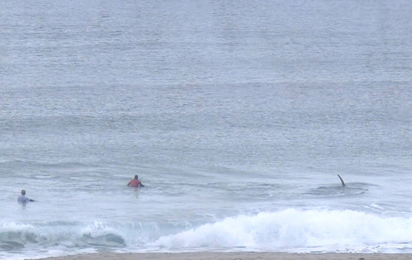 北極圏のサーフィン大会、出場者のすぐ横にシャチ登場