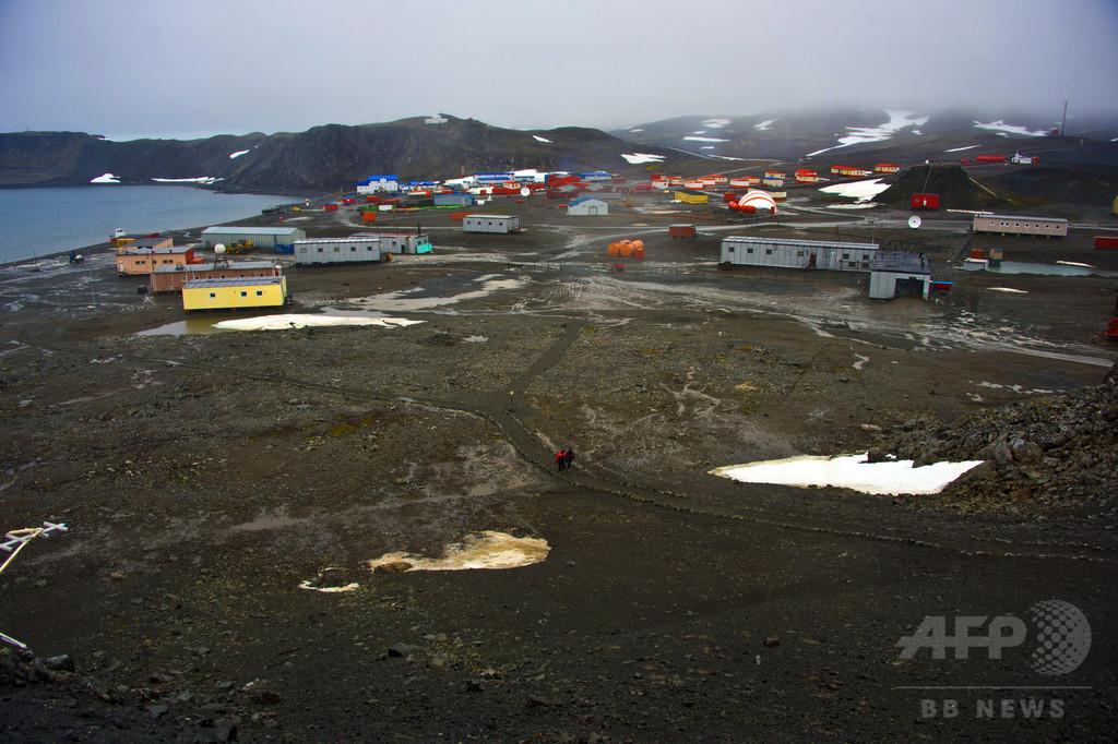 南極のユスリカ、昆虫最小ゲノムで過酷環境に適応か 米研究