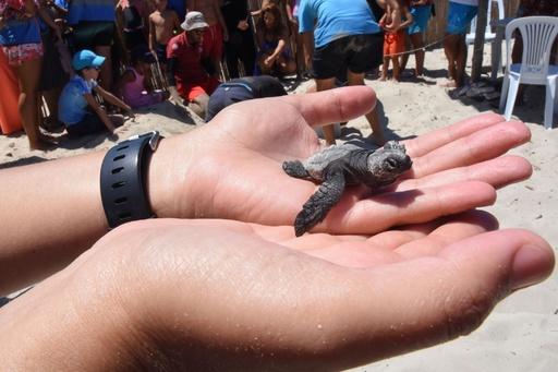 アカウミガメと観光客が砂浜をシェア、チュニジアの島